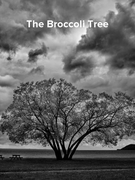 The Broccoli Tree