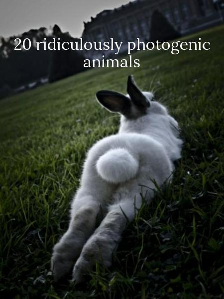 20 ridiculously photogenic animals