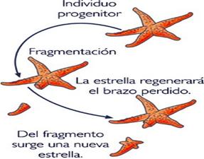 La Reproducción Sergio Y Paloma